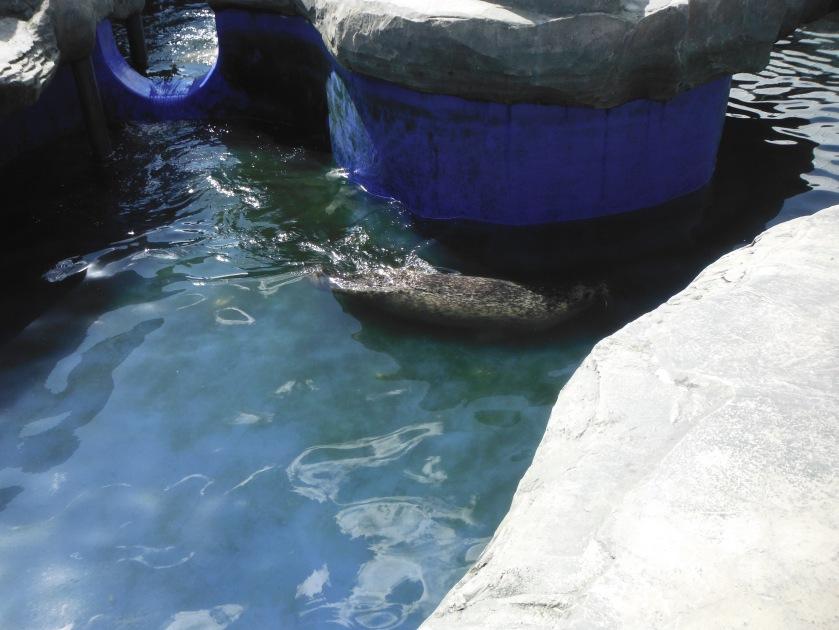 Sealife 3
