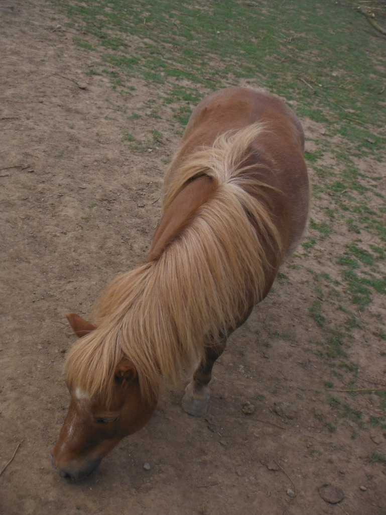 Filey Animals 8